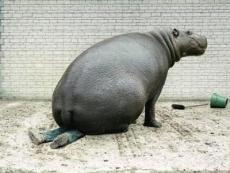 Hippo Squish